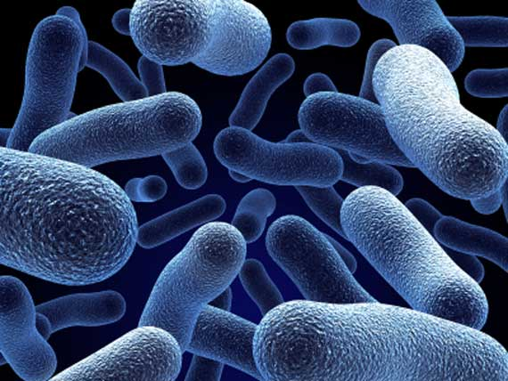 бактерии вирусы грибки