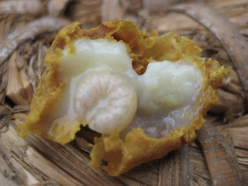 Апитерапия псориаза (лечение продуктами пчеловодства)