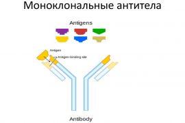 Показания к использованию моноклональных антител при псориазе, эффективные препараты
