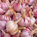 Чеснок: польза и вред свежего и тушеного овоща. Чем полезен запах чеснока?