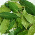 Лечебные свойства лаврового листа при псориазе